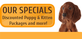 veterinarian in palm desert
