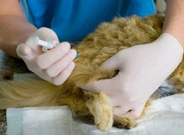 Vaccines & Pet Vaccinations - How, Why, and When