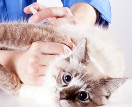 Pet Vaccinations For Kittens