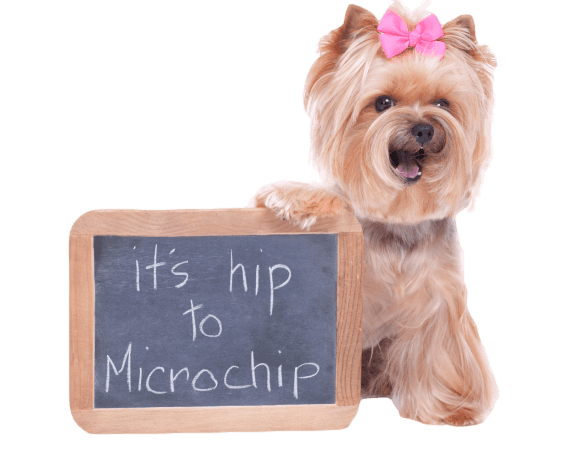 Pet Microchipping Palm Desert, CA from Country Club Animal Clinic